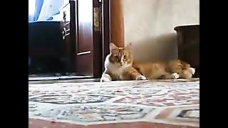 Кот уходит/ Kass läheb ära