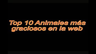 Koostamine - naljakas loomade Videod
