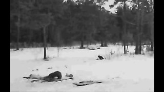 Estonia WTE Winter Feeding Ground 3 25 13 Wolverines