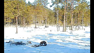 Estonia WTE Winter Feeding Ground 3 26 13 Fox