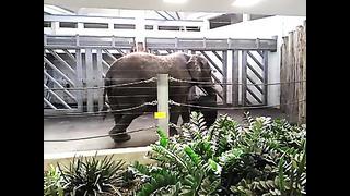 Tallinn Zoo. Elephant sleeping standing still -- Таллинский зоопарк. Слон спит стоя