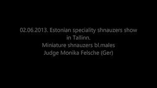 Special shnauzers dog show in Tallinn Miniature shnauzers bl males