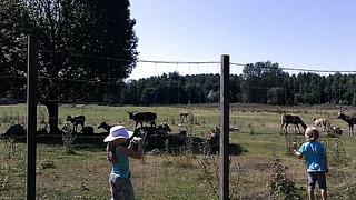 Таллинн Зоопарк