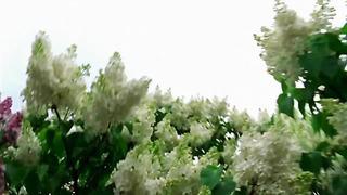 ESTONIA _Let's Get Loud_ Suntribe [Eurovision 2005_ Semi Final]
