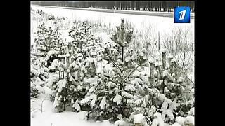 На данный момент в Эстонии сложные дорожные условия