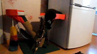 Kiisu uus mänguasi :)