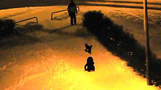 Поездка на собачьих упряжках в Ласнамяе