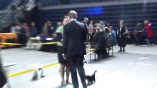 2.03.14 CAC, Tallinn _ Male Puppy Class