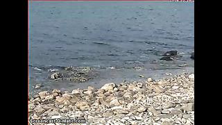 Grey Seal Webcam Estonia 2014 03 04