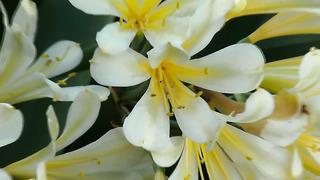 Orchids Exhibition in Tallinn Botanic Garden. Shot in 4K.