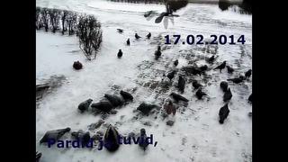Pardid ja tuvid, Tartu, 17.02.14