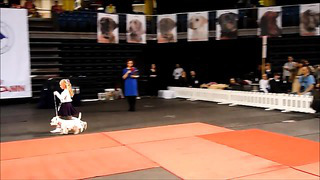 Tallinn Winner 2014, child & dog competition 12.04.2014