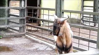 Таллинский зоопарк (Tallinn, Zoo)