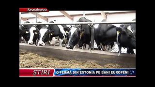 FERMĂ DIN ESTONIA PE BANI EUROPENI